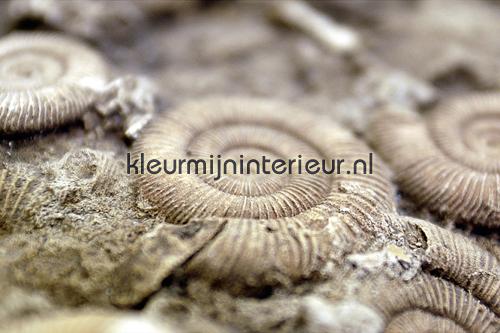 Behang Kinderkamer Strand : Fossil 470063 fotobehang AP Digital van ...