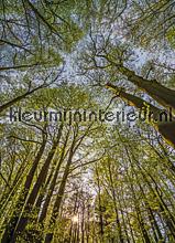Canopy fotobehang Komar Bossen