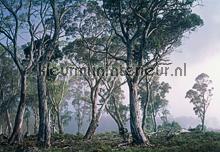 Fantasy Forest fotobehang Komar Bossen