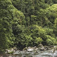 Bergwater fotobehang Behang Expresse Bossen