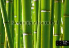 Bamboo fotobehang AG Design Bloemen Planten