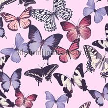 Paars roze vlinders
