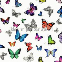 Butterflies kleurrijk