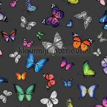 Butterflies kleurrijk op zwart