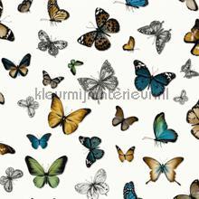 Butterflies oker bruin groen blauw