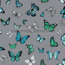 Butterflies zilver groen blauw