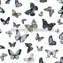 Butterflies wit zwart