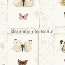 Vlinders op muur