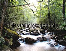 Mountain river fotobehang Noordwand Bossen