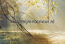 Mornig sun rays fotobehang Noordwand Bossen