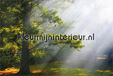 Mystic forest fotobehang Noordwand Bossen