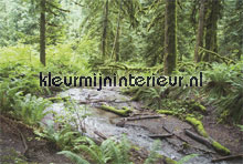 River in forest fotobehang Noordwand Bossen
