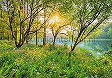 Spring Lake fotobehang Komar Bossen