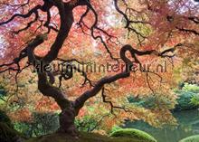Japanischer Garten fotobehang Mantiburi Bossen