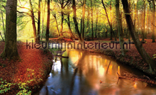 Autumn forest fotobehang Kleurmijninterieur Bossen
