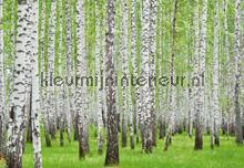 Birch fotobehang Kleurmijninterieur Bossen