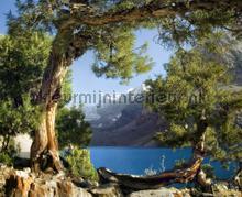 Lake at the forest fotobehang AG Design Bossen