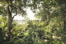Dschungel fotobehang Komar Bossen