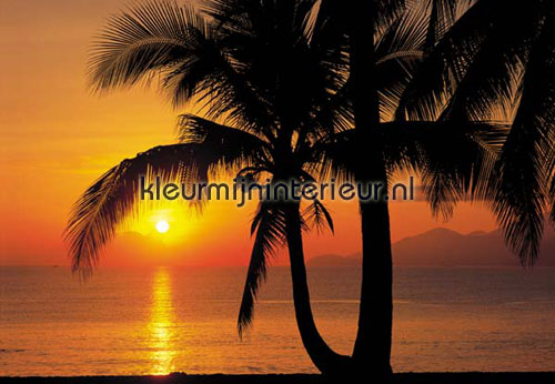 Behang Kinderkamer Strand : palm beach sunrise fotobehang 8-255 Zon ...