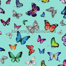 Butterflies turquoise