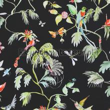 Colourful exotic designed birds black