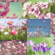 April heather pink