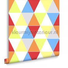 Harlequin Bright