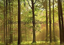 fotobehang autumn forest