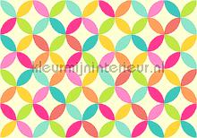 Colorful graphic leafs