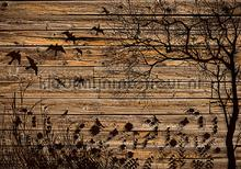 Nature on wooden background