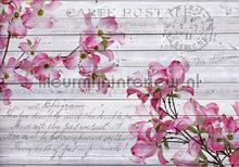 Pink orchids on wood