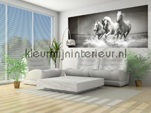 Black and white galloping horses