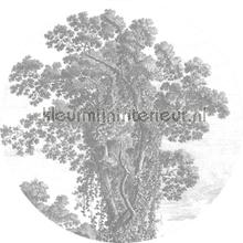 engraved tree