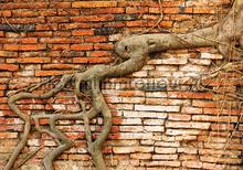Roots through the wall