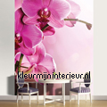 Pink Orchid small