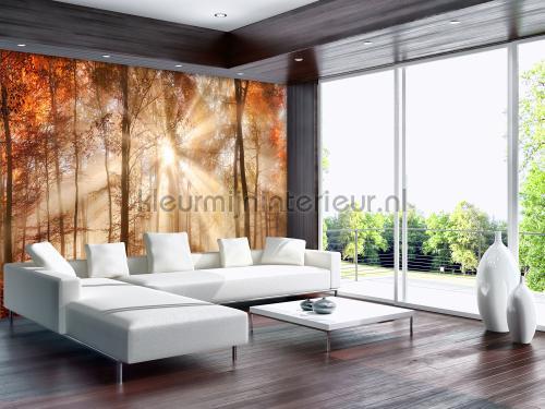 Kleur Mijn Interieur : Kleur mijn interieur latest moonbeam delight gordijnen delight