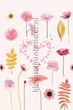Flowers in pink background