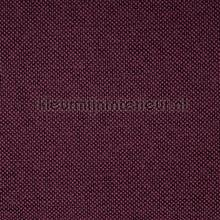 Sunshade Plum